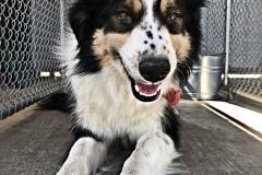 happy-dog-2